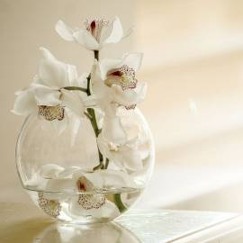 Gold Orchid Fragrance Oil