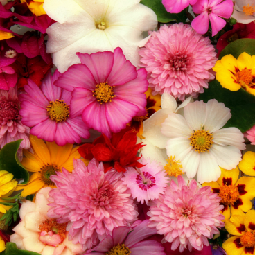 Summer Bouquet Zoflo Fragrance Oil
